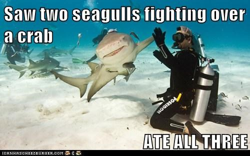 bro,high five,ocean,shark,water,yeah