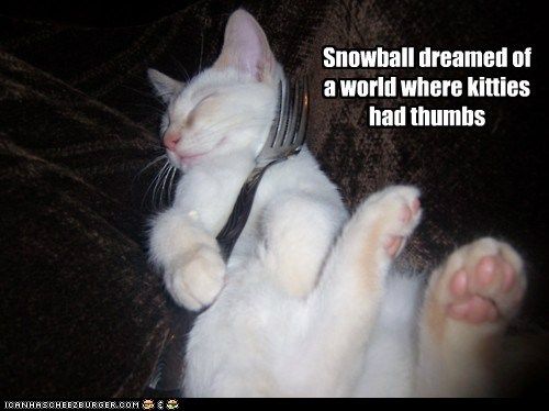 best of the week,Cats,dream,dreaming,Hall of Fame,paradise,thumbs,where,world