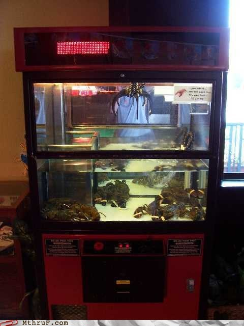 arcade,claw game,g rated,lobster,lobster tank,monday thru friday