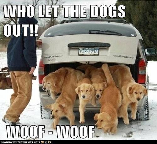 WHO LET THE DOGS OUT!!   WOOF - WOOF