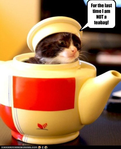 Teabag kitty!