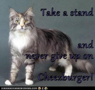 Take a stand and  never give up on Cheezburger!