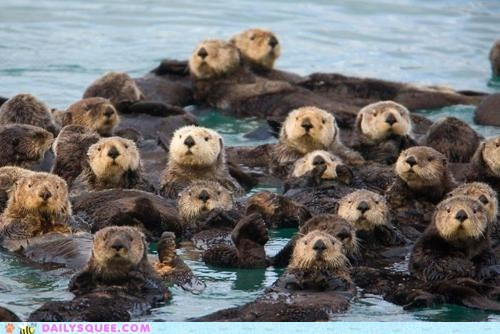float,floating,lots,otters,raft,squee,water