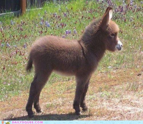 baby,best of the week,burrito,burro,burros,donkey,donkeys,fuzzy,squee,tiny