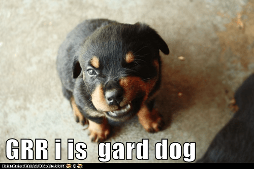 GRR i is  gard dog