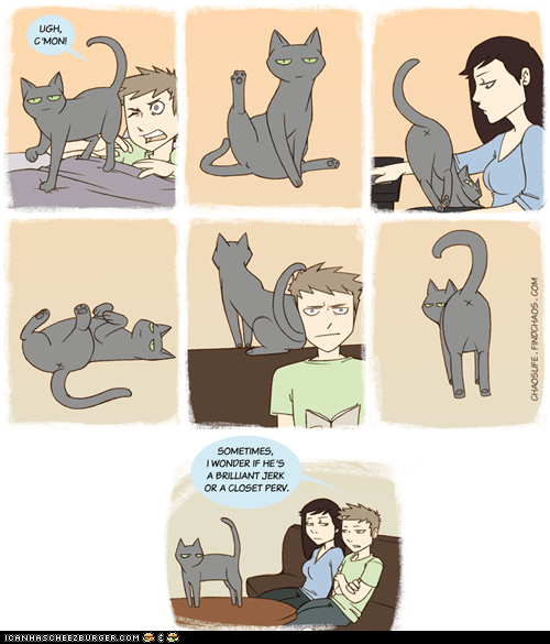 behavior,Cats,comic,comics,gross,jerk,pervert