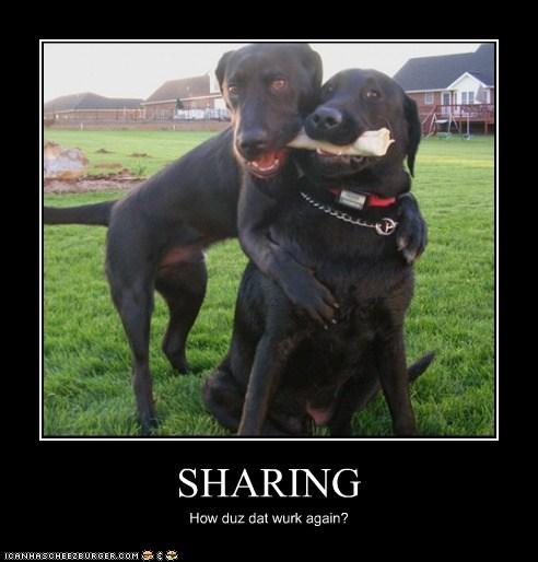 demotivational,dogs,funny,labrador