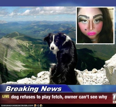 Breaking News - dog refuses to play fetch, owner can't see why