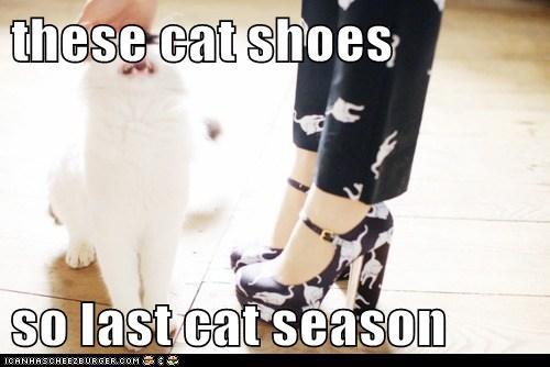 these cat shoes  so last cat season