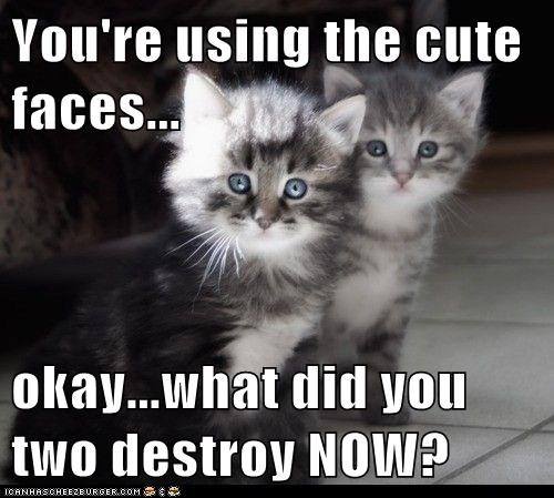 You're using the cute faces...  okay...what did you two destroy NOW?