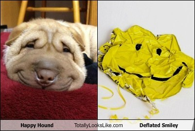 Happy Hound Totally Looks Like Deflated Smiley