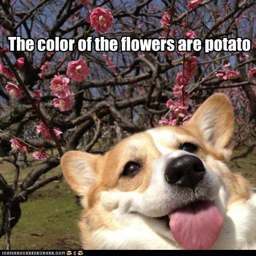 The color of the flowers are potato