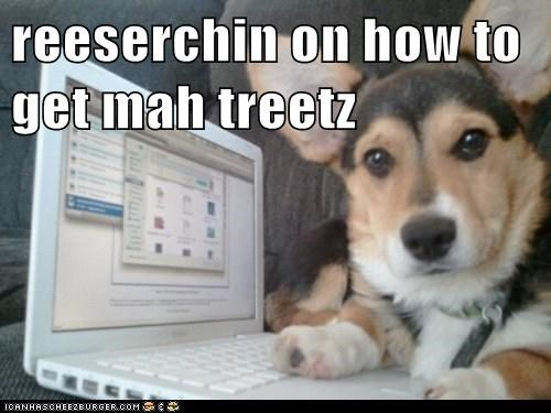 reeserchin on how to get mah treetz