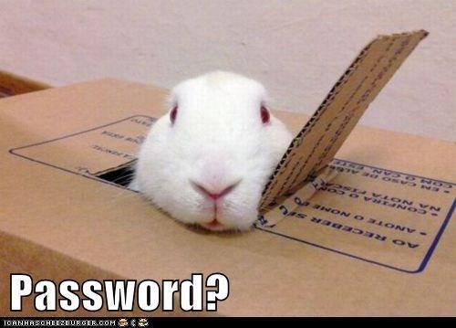 ask,bunny,club,door,password,rabbit