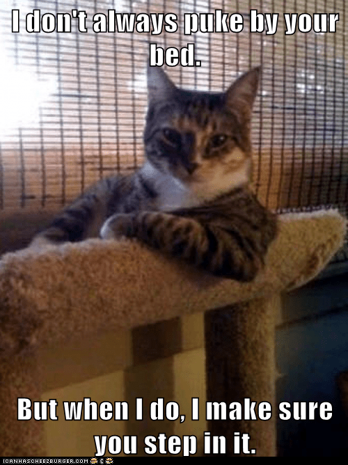 Animal Memes: The Most Interesting Cat in the World - Same Spot Every Time