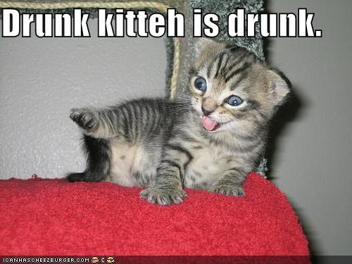 Drunk kitteh is drunk.