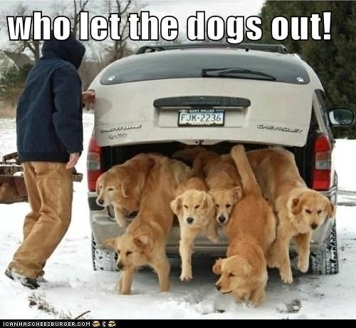 who let the dogs out!