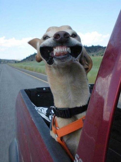It's Sundog!