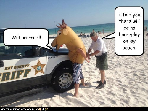 Mr Ed busted on the beach.