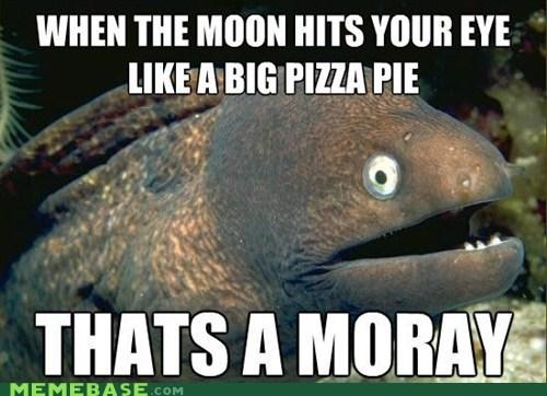Bad Joke Eel,jokes,meme madness,moray,pizza