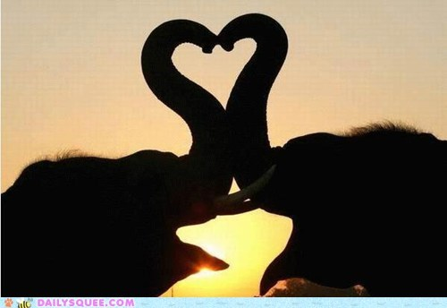 elephants,heart,love,romantic,silhouette,sunset