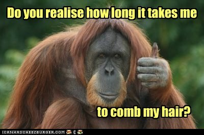 comb,hair,hairy,long time,opposable thumbs,orangutan