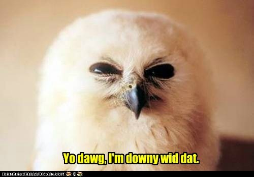 He's a Very Talon-ted Owl