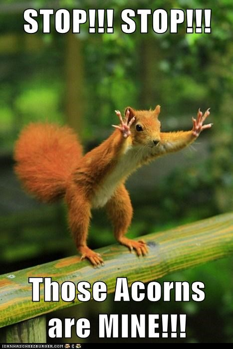 STOP!!! STOP!!!   Those Acorns are MINE!!!
