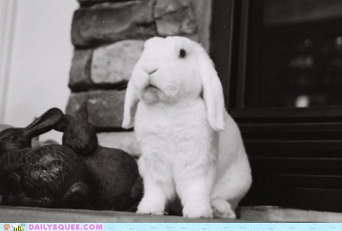 bunny,floppy ears,happy bunday,white