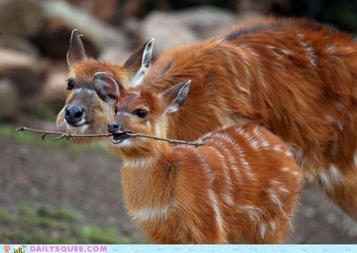 baby,deer,mom,stick,whatsit