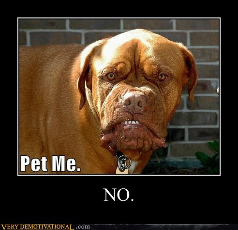 dogs,hilarious,pet no,scary