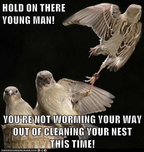 HOLD ON THERE                                                                        YOUNG MAN!  YOU'RE NOT WORMING YOUR WAY OUT OF CLEANING YOUR NEST THIS TIME!