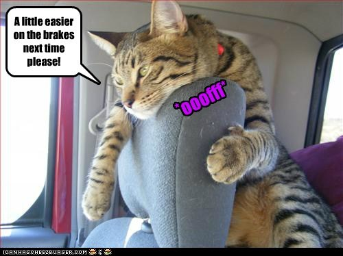 brakes,car,cat,drive,fast,lolcat,ouch,ow,slam