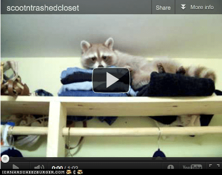 around the interwebs,closet,closets,mess,people pets,raccoon,raccoons