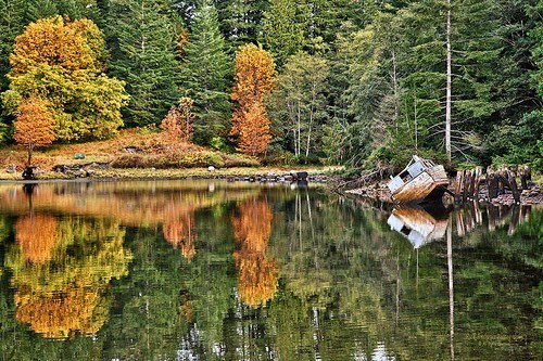 Forest,lake,reflection