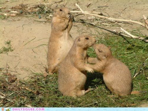 friend,grass,KISS,Prairie Dogs,sand