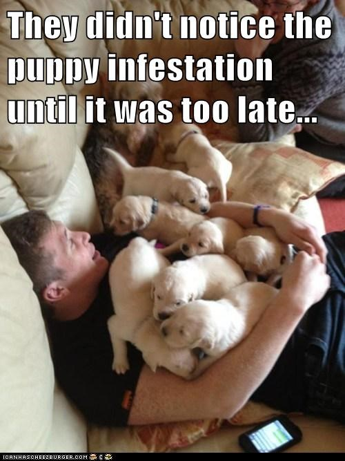 I Has A Hotdog: Invasion of teh Puppies