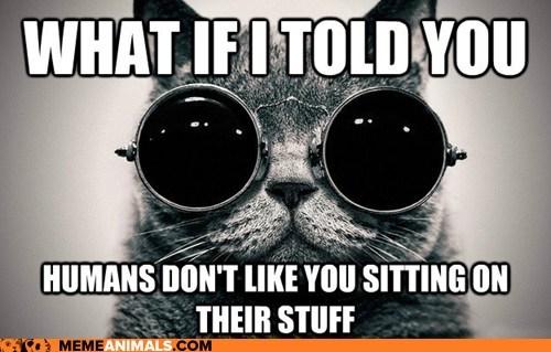 humans,Memes,Morpheus,morpheus cat,sitting,stuff,the matrix