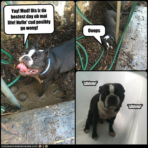 bath,french bulldogs,mud,puppy