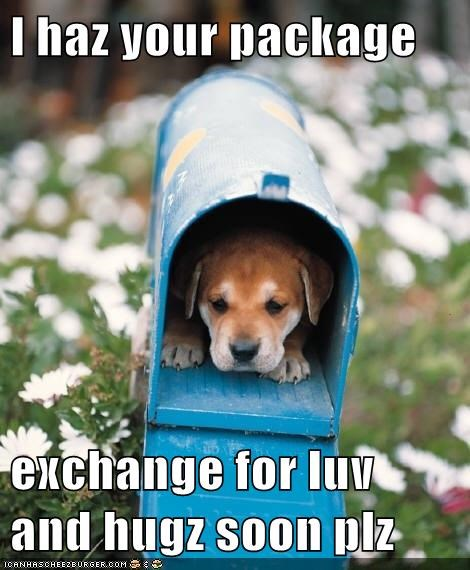 Delivery Dog Just Wants Love