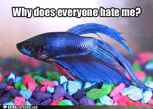 CHEEZY 2012: Betta Fish is hurt & confused.