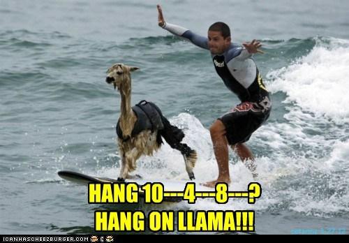 HANG 10---4---8---?HANG ON LLAMA!!!