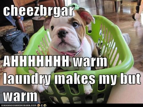 cheezbrgar  AHHHHHHH warm laundry makes my but warm
