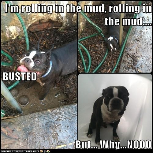 I'm rolling in the mud, rolling in the mud.... BUSTED But... Why...NOOO