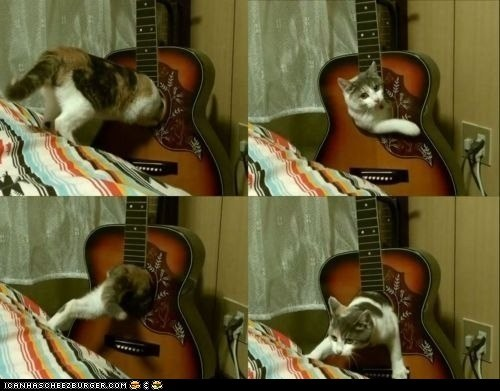 Cats Are the Best Musicians