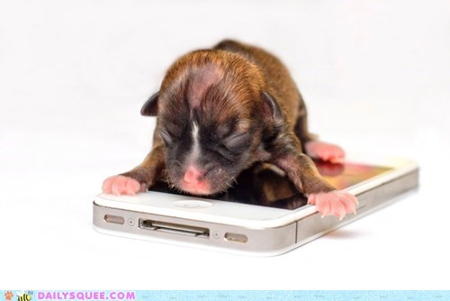 The World's Smallest Puppy