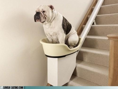 dogs,elevator,escalator,fat,ridiculous