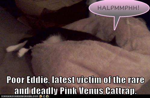 Poor Eddie, latest victim of the rare and deadly Pink Venus Cattrap.