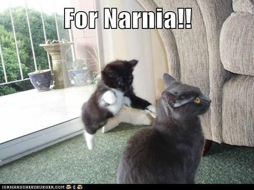 adventure,attack,cat,fantasy,lolcat,narnia,surprise,war