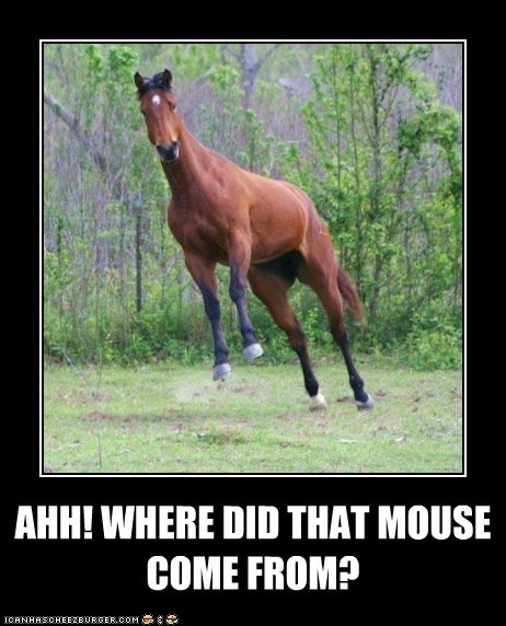 AHH! WHERE DID THAT MOUSE COME FROM?